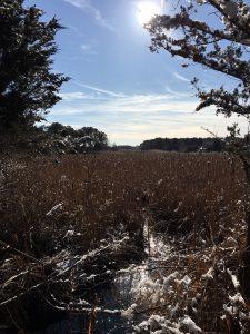 Woods in winter in Dennis