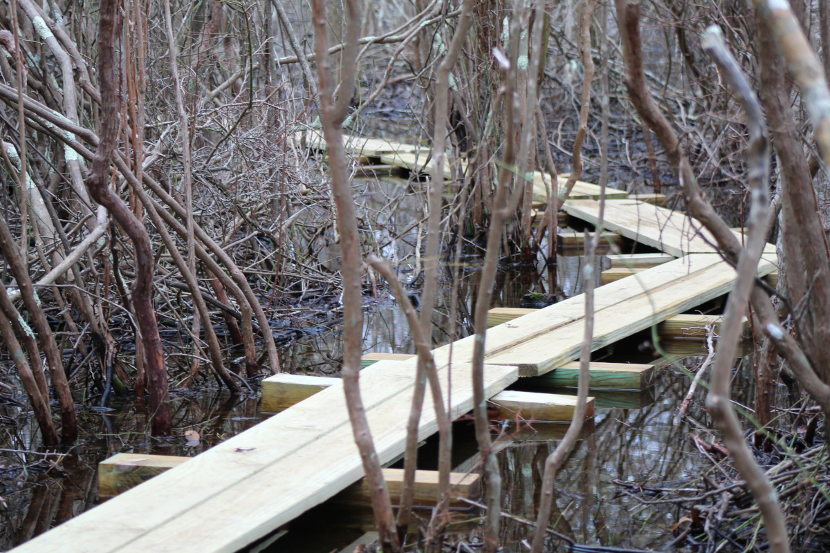 Boardwalk trail at Coles Pond Bog