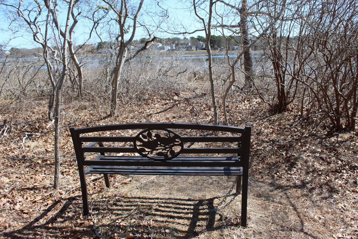 Bench and woods at Swan River conservation area