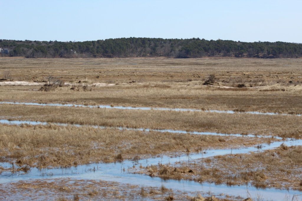 View of creek winding through marshland